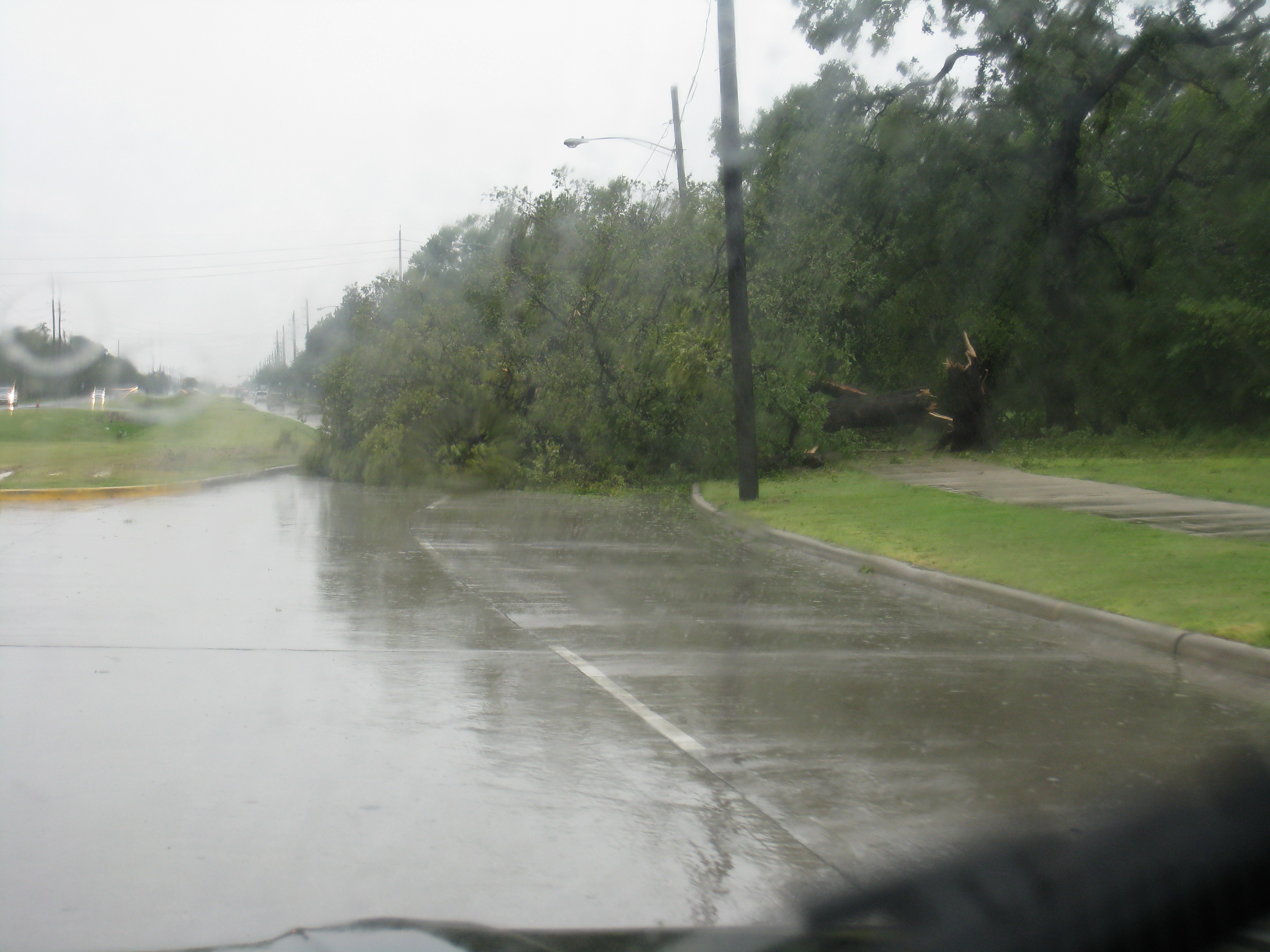 Tree at Almeda just past MacGregor heading south