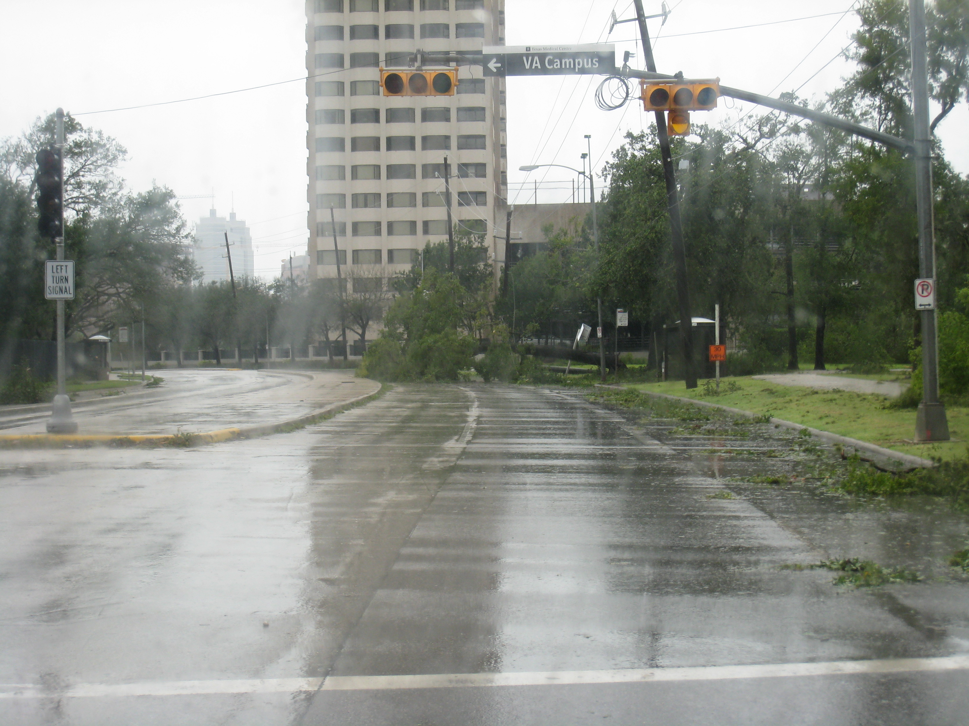 Tree on Holcombe in front of The Spires